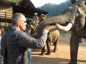 Feeding an elephant with beautiful tusks. Turns out they really like bananas.