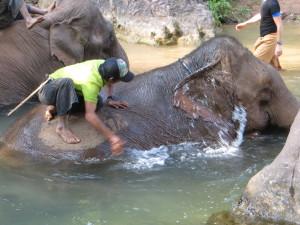 The elephants apparently really love their baths