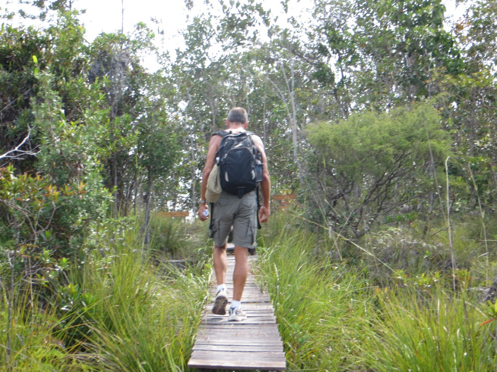 On the hiking trail at Bako National Park