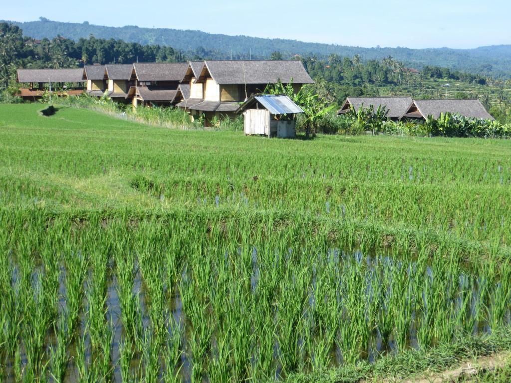 Sanak Retreat from across the rice fields