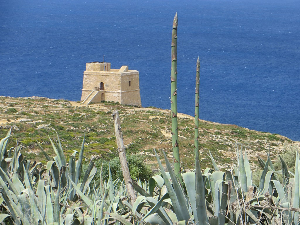 In the background is one of the early 17th century watchtowers that line the coast of Malta and Gozo. In the foreground is a type of agave with giant spikes that grow as tall as 25 feet and look exactly like asparagus.