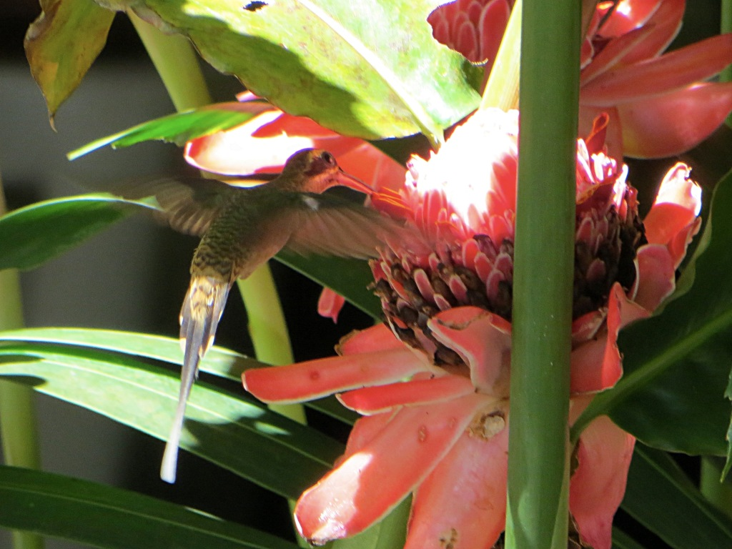 Capturing hummingbirds on camera is a challenge
