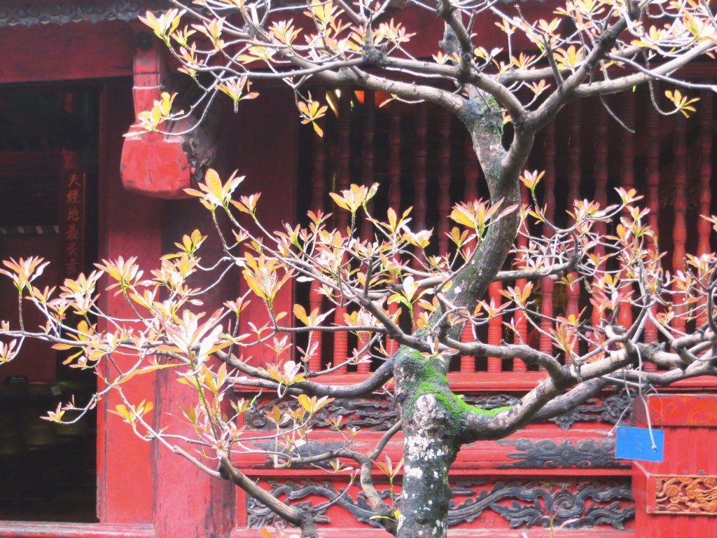 Beauty inside the Temple of Literature