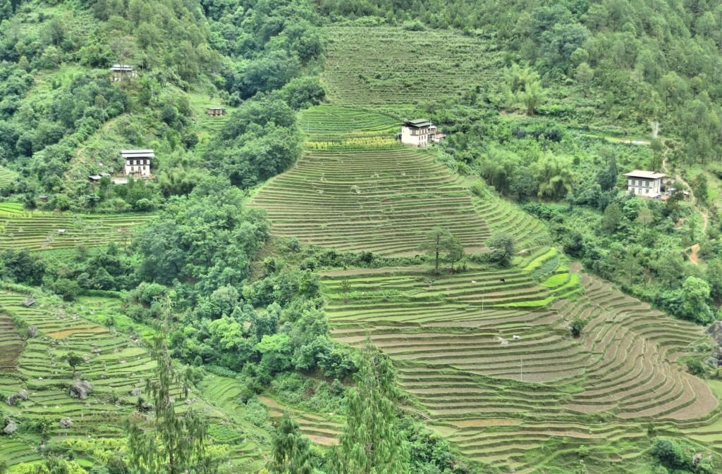 OK, I swear, the last terraced rice fields. For today, at least.