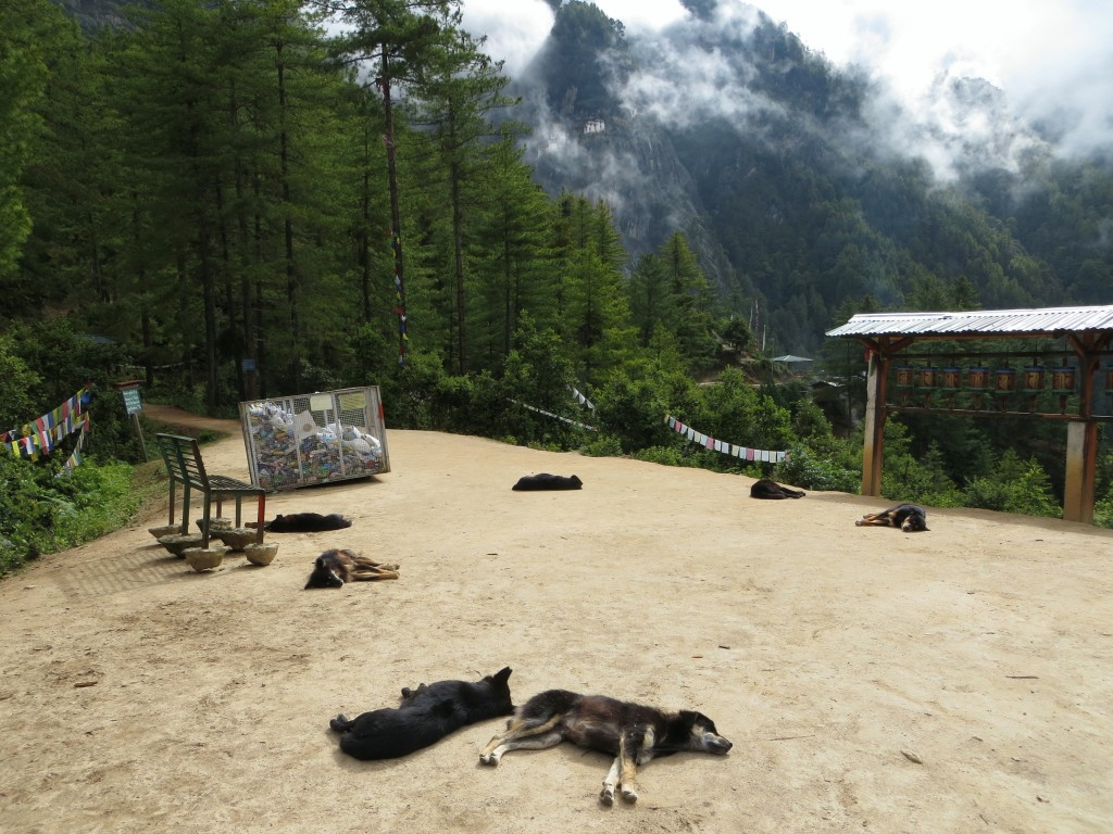 Like everywhere else in Bhutan, the climb featured lots and lots of dogs.