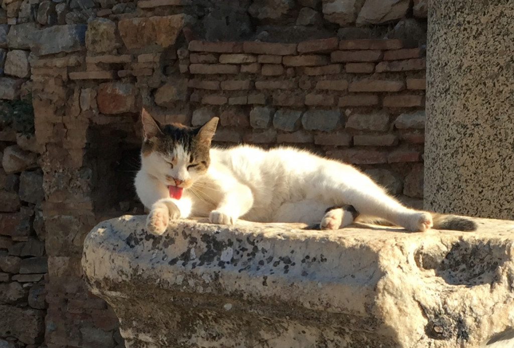 This little cutie greeted us very shortly after entering the ruins of Ephesus. She wasn't alone.