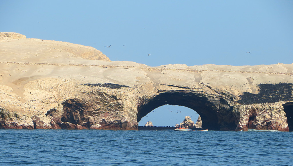 The biggest of the Ballestas Islands. Those dark spots on either side of the tunnel are massive colonies of birds all jammed together.