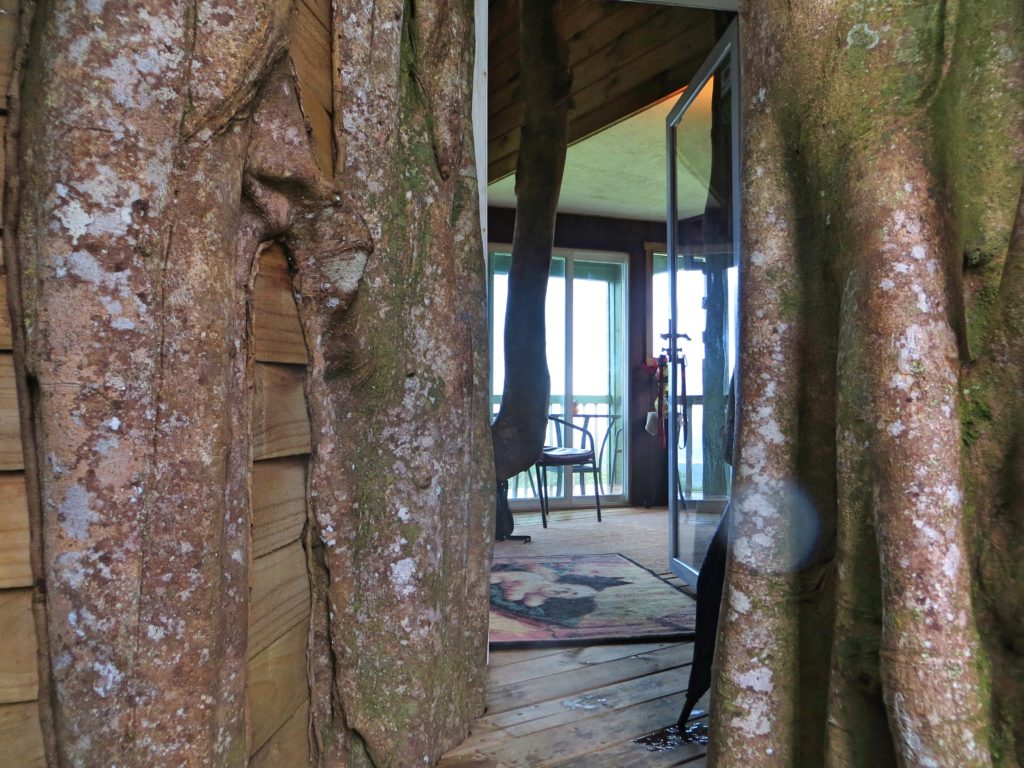 """The entrance to our cabin, maybe 50 feet above ground level, through the """"arial roots"""" that have grown into solid trunks"""