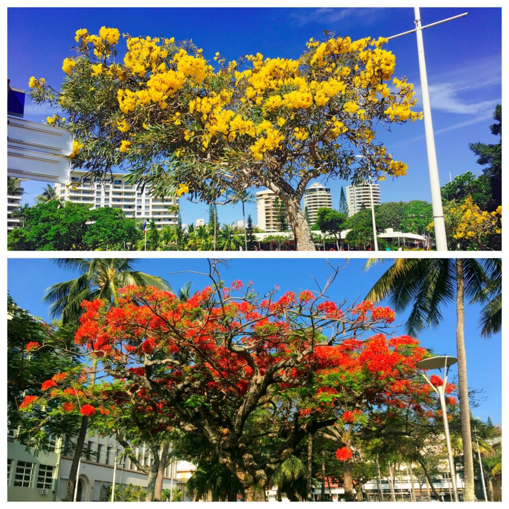It's spring in New Caledonia and there were lots of flowering trees in bloom