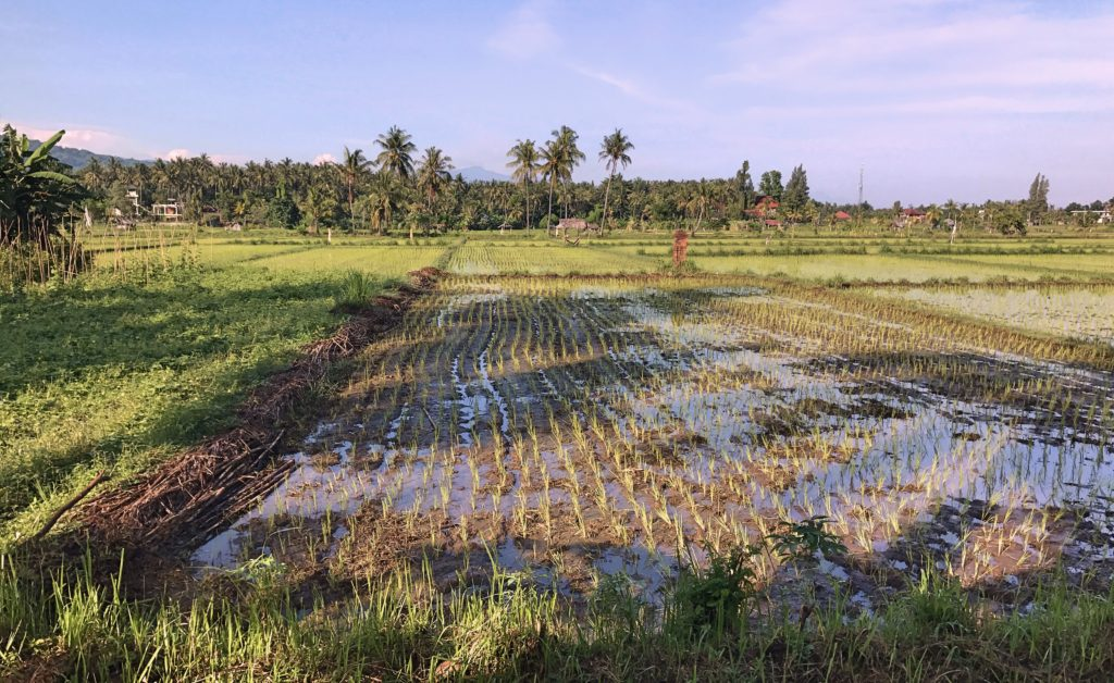 And did I mention the rice fields everywhere?
