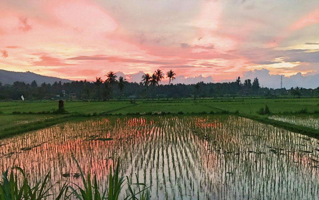 These are the rice fields next to our villa. I didn't even set foot off our grounds to take the photo.