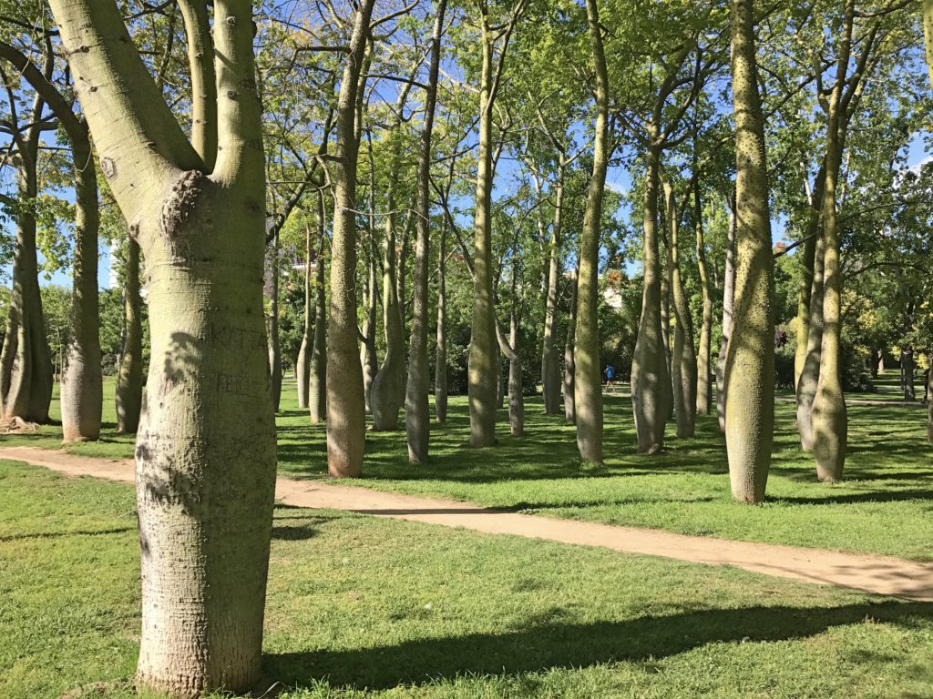 A grove of what I think are baobab trees in the wonderful park that is the old Turia riverbed
